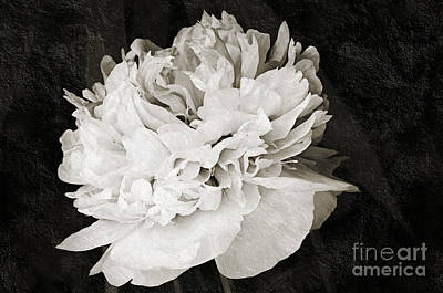 Photograph - Whisper Softly by Andee Design
