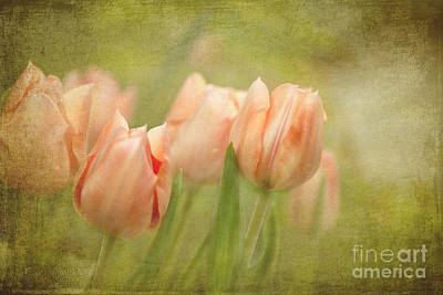 Spring Bulbs Digital Art - Whisper To Me Softly by Beve Brown-Clark Photography