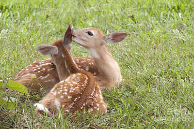 Art Print featuring the photograph Whispering Fawns by Jeannette Hunt