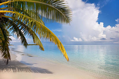 Photograph - Whispering Palm On The Tropical Beach by Jenny Rainbow