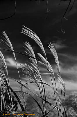 Photograph - Whispering Wind by Dan Crosby