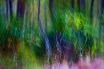 Photograph - Whispers On The Wind by Michelle Wrighton