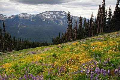 Whistler Blackcomb Wild Flowers In Bloom Art Print by Pierre Leclerc Photography