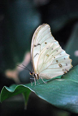 Photograph - White And Beautiful by Amee Cave