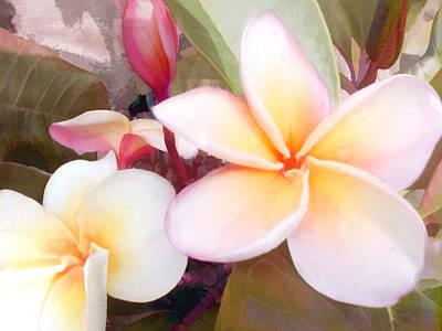 White And Pink Plumeria Art Print by Elaine Plesser