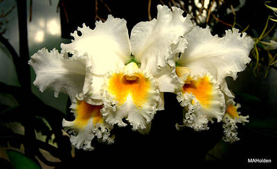 White And Yellow Orchid Original