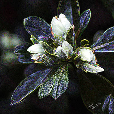 Photograph - White Azelea Buds by Judi Quelland