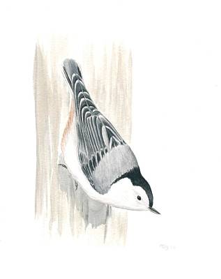 Painting - White-breasted Nuthatch by Anna Bronwyn Foley