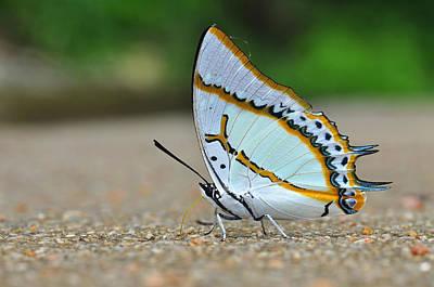 Bokhe Photograph - White Butterfly by Nittaya Tungsupatawat