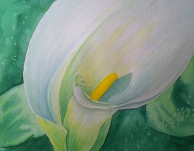 Painting - White Calla Lily by Stephanie Reid