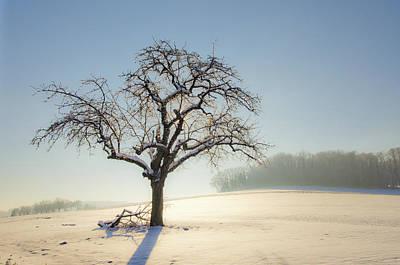 Bare Trees Photograph - White Calm by Arnaud Boukalala