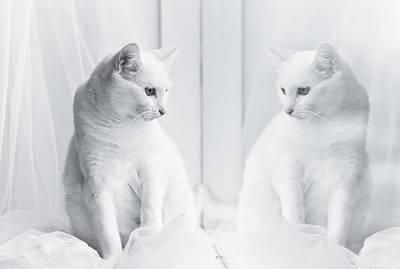 White Cat Reflected In Window Art Print by Vilhjalmur Ingi Vilhjalmsson