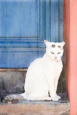 White Cat Art Print by Tom Gowanlock