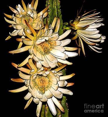 White Cereus Flowers - Digital Art  Print by Dolores Root