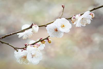 Digital Art - White Cherry Blossoms 2 by Francesa Miller