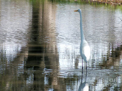 Photograph - White Crane by Tammy Herrin