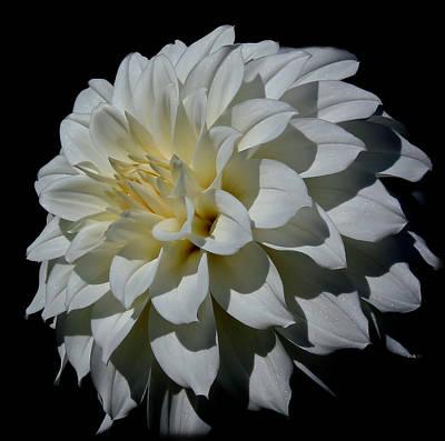 Photograph - White Dahlia by Athena Mckinzie