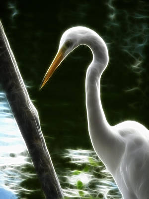 Photograph - White Egret Abstract by Cindy Wright