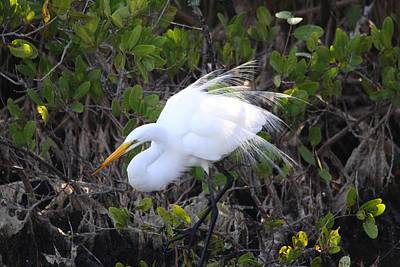 Photograph - White Egret by Jeanne Andrews