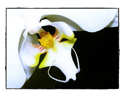 White Elegance Art Print by Judi Bagwell