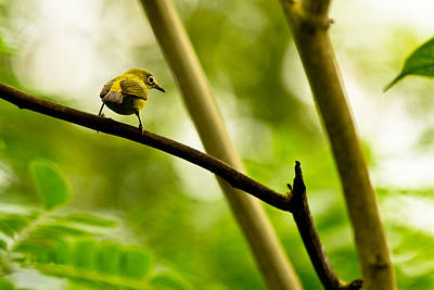 Photograph - White-eye by Justin Albrecht