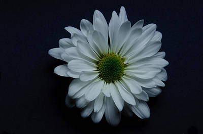 White Flower 1 Art Print by Ron Smith