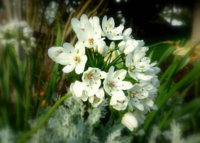 Digital Photograph - White Flower Cluster by Cindy Wright