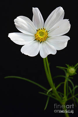 Photograph - White Flower by Steve Javorsky