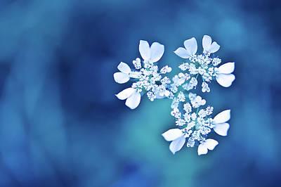 White Flower Photograph - White Flowers In Blue Bokeh by Alexandre Fundone