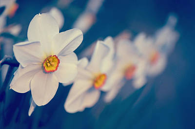 White Flowers Art Print by Philippe Sainte-Laudy Photography