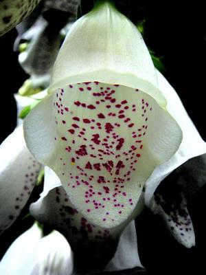 Photograph - White Foxglove by Roberto Alamino