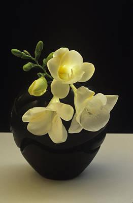 Art Print featuring the photograph White Freesias In Black Vase by Susan Rovira