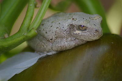 Photograph - White Frog 3 by Kennith Mccoy