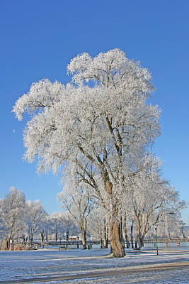 White Frost Tree Art Print by Ralf Kaiser