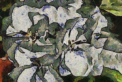 Digital Art - White Geraniums   -- Vangogh by Charles Muhle