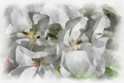 Digital Art - White Geraniums - Watercolor by Charles Muhle