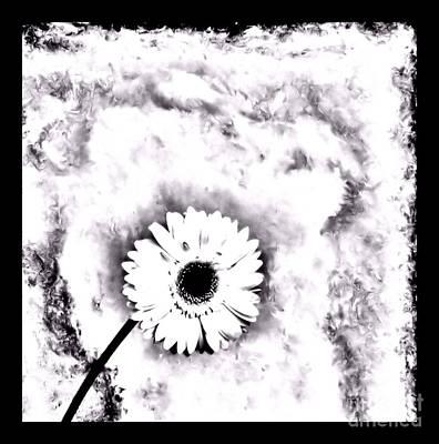 White Gerber Daisy Abstract Art Print by Marsha Heiken