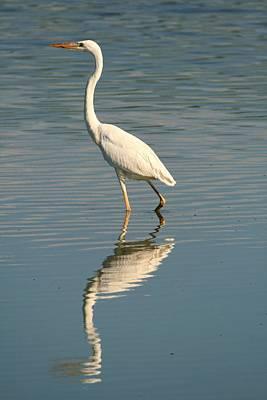 Photograph - White Great Blue Heron by Ira Runyan