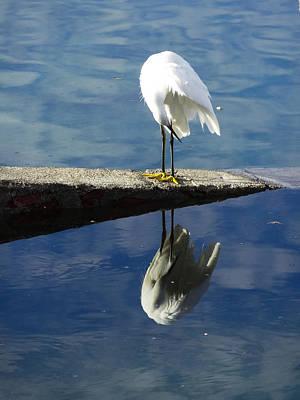 White Heron Art Print by Anne Mott
