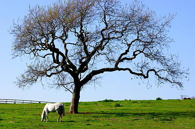 Photograph - White Horse And Oak by Jeff Lowe