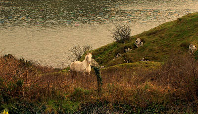 Art Print featuring the photograph White Horse by Barbara Walsh