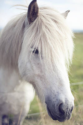 Y120831 Photograph - White Horse by copyright by Elena Litsova Photography