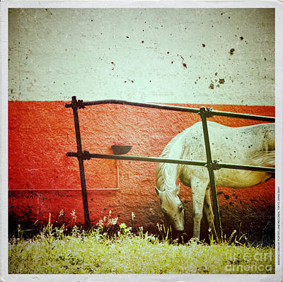 Photograph - White Horse II by Silvia Ganora