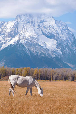 White Horse In Teton National Park Wy Usa Art Print by Chasing Light Photography Thomas Vela
