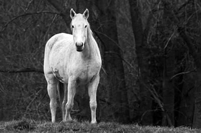 White Horse Art Print by Steve Parr