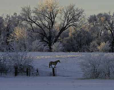 White Horse Winter Art Print by Kenneth McElroy