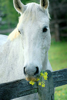 Photograph - White Horse With Flowers II by Emanuel Tanjala
