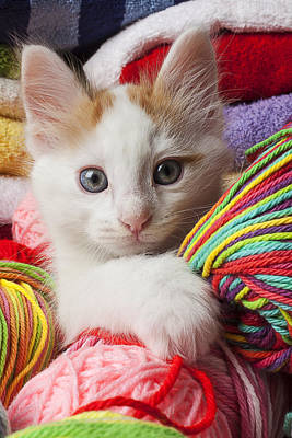 Photograph - White Kitten Close Up by Garry Gay