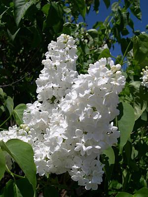 Digital Art - White Lilacs by Claude McCoy