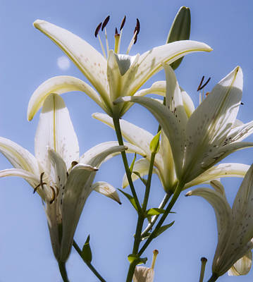 Photograph - White Lilies II by Michael Friedman
